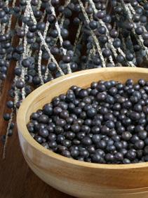 Les baies d'açaï biologiques, une osurce naturelle de bien-être et d'énergie.