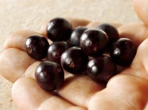 La baie d'açaï cultivée biologiquement est très riche en antioxydants naturels puissants